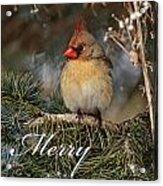 Christmas 3 Acrylic Print