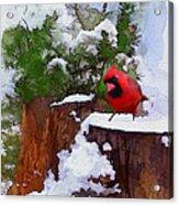 Christmas Guest Acrylic Print