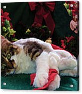 Christmas Joy W Kitty Cat - Kitten W Large Eyes Daydreaming About Xmas Gifts - Framed W Poinsettias Acrylic Print
