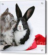 Christmas Kitten And Rabbit Acrylic Print