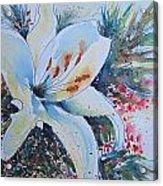 Christmas Lily Acrylic Print