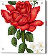 Christmas Rose 2011 Acrylic Print