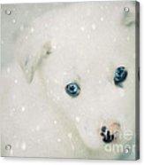 Christmas Snow Acrylic Print