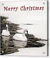 Christmas Swans 2367 Acrylic Print