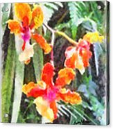 Chromaticorchids Acrylic Print by Anthony Caruso