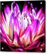 Chrysis Acrylic Print