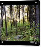 Cinematic Style Back Woods At Sunset Acrylic Print