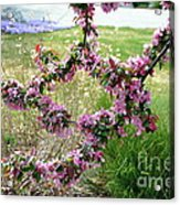 Circle Of Blossoms Acrylic Print