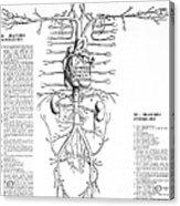 Circulatory System, 16th Century Acrylic Print