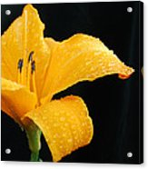 Citrus Rain II Acrylic Print