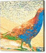 Citybird Acrylic Print