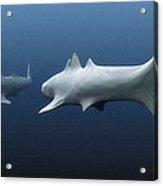 Cladoselache Sharks Acrylic Print