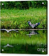 Cleared For Landing Acrylic Print
