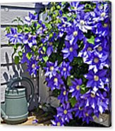Clematis And Watering Can Acrylic Print