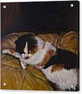 Cleo On The Blanket Acrylic Print