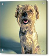 Cleveland Dog Acrylic Print by Square Dog Photography
