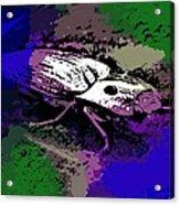 Click Beetle On Porsche Acrylic Print