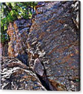 Climbing Rocks And Trees Acrylic Print