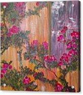 Climbing Rose Vine Acrylic Print