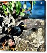 Cllecting Nesting Materials Acrylic Print