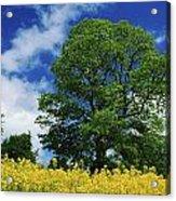 Clonmel, County Tipperary, Ireland Acrylic Print