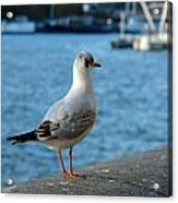 Close Up Of A Tern Next To The Thames And London Eye Acrylic Print