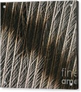 Close-up Of A Turkey Feather Acrylic Print