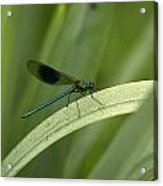 Close-up Of Dragonfly Perched On Leaf Acrylic Print