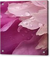 Close-up Of Pink Flower Acrylic Print
