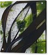 Close-up Of Seaweed In Water Acrylic Print
