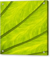 Close-up Of Surface Of A Green Leaf Acrylic Print