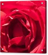 Close Up Of The Petals Of A Red Rose Acrylic Print