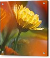 Close-up Of Wildflower Acrylic Print