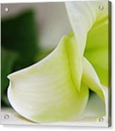 Close-up On White Lilies Acrylic Print by Gal Ashkenazi