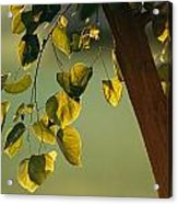 Close View Of A Tree Branch And Leaves Acrylic Print