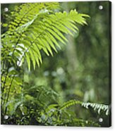 Close View Of Ferns In A Papua New Acrylic Print