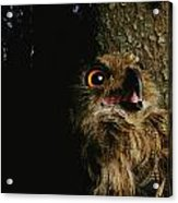 Close View Of Owl Near A Tree Trunk Acrylic Print