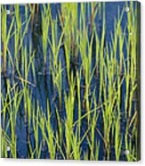 Close View Of Water Grasses Growing Acrylic Print