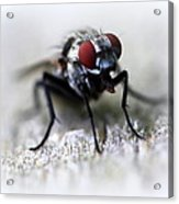 Closeup Of A Fly  Acrylic Print by Maureen  McDonald