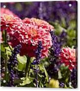 Closeup Of Colorful Flowers In Butchart Acrylic Print