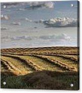 Clouds Over Canola Field On Farm Acrylic Print