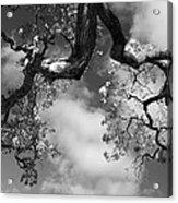 Cloudy Oak Acrylic Print