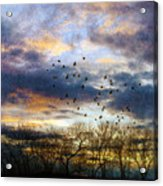 Cloudy Sunset With Bare Trees And Birds Flying Acrylic Print