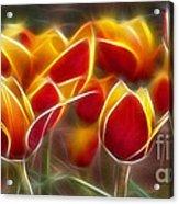 Cluisiana Tulips Fractal Acrylic Print by Peter Piatt