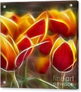 Cluisiana Tulips Triptych Panel 2 Acrylic Print