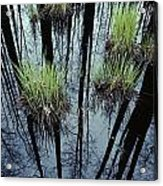 Clumps Of Grass In Water Reflecting Acrylic Print
