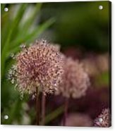 Cluster Of Beauty Acrylic Print