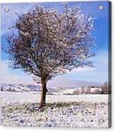 Co Antrim, Ireland Hawthorn Tree Known Acrylic Print by The Irish Image Collection