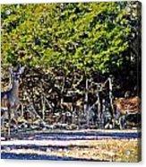 Co Habitating Acrylic Print