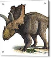 Coahuilaceratops Magnacuerna Acrylic Print